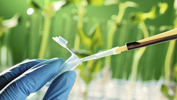 Pengertian, Jenis dan Contoh Bioteknologi