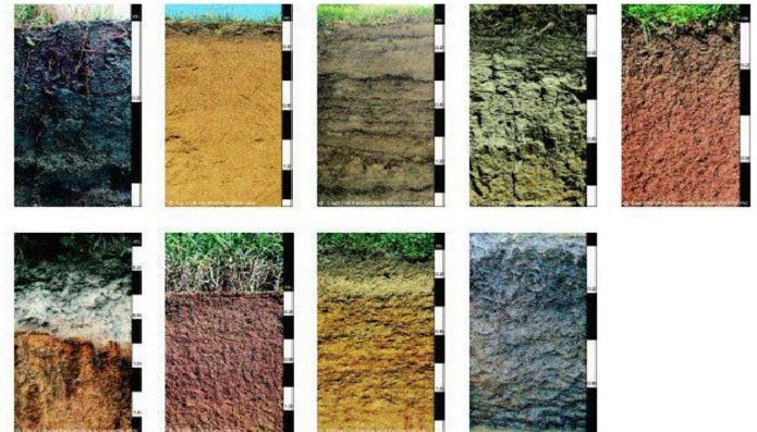 Pengertian, dan Faktor Yang Menyebabkan Warna Tanah Berbeda-beda