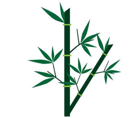 Klasifikasi dan Morfologi Tanaman Bambu