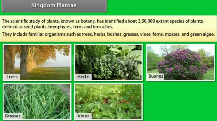 Pengertian, Ciri, Klasifikasi Dan Manfaat Kingdom Plantae
