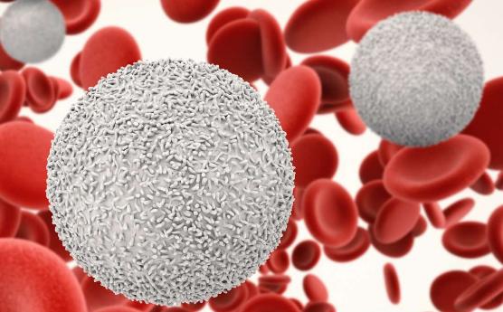 Pengertian Darah : Fungsi dan Bagian - Bagian Darah