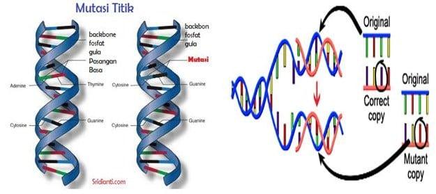 Pengertian Mutasi Gen : Gelaja, Penyebab dan Jenis Mutasi Gen