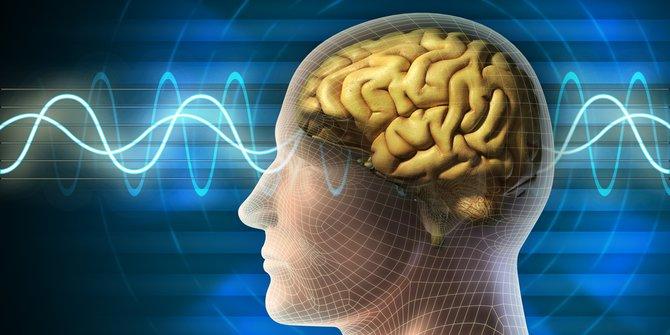 Pengertian Otak : Bagian, dan Fungsi Otak