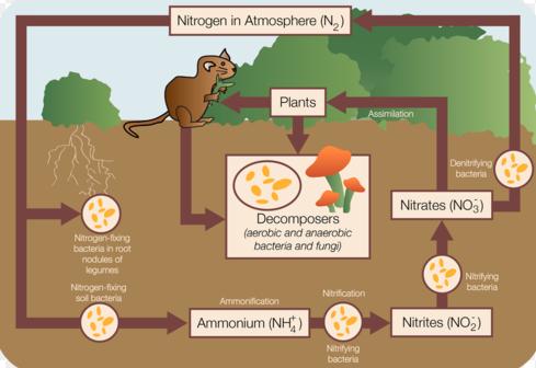 Proses Siklus Nitrogen Pada Tanah