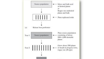 Pengertian, Kelebihan, dan Kelemahan Metode Turunan Biji Tunggal (TBT) pada Tanaman