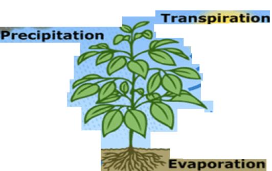 Pengertian, Fungsi, Ruang Lingkup Fisiologi Tumbuhan
