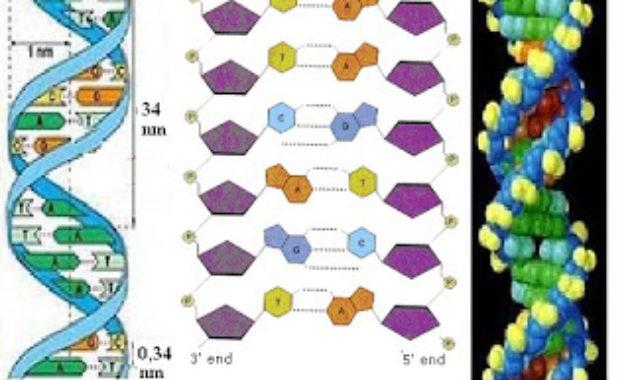 Pengertian dan Penyusun Basa Nitrogen