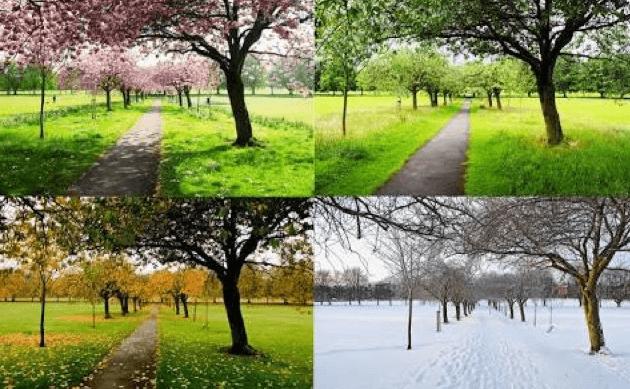 Pengertian dan Perbedaan Iklim Tropis dan Sub Tropis