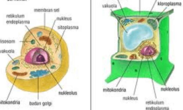 Komponen-Komponen Protoplasma dan Non-Protoplasma